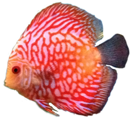 New Saltwater Azalea Aquariums